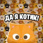 Simbachka — Кот на стиле