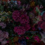 The BlueStocking — Bones & Lilies