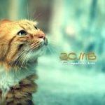Зомб — Дворовый кот