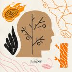 Zes — Juniper