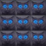 Паша Proorok — Хочу быть котом